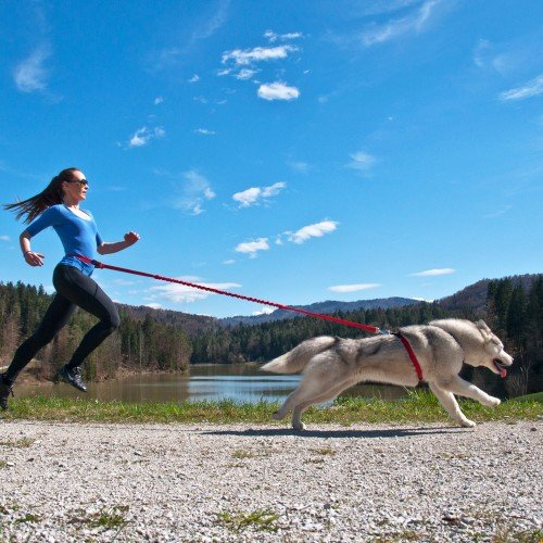 Running leash